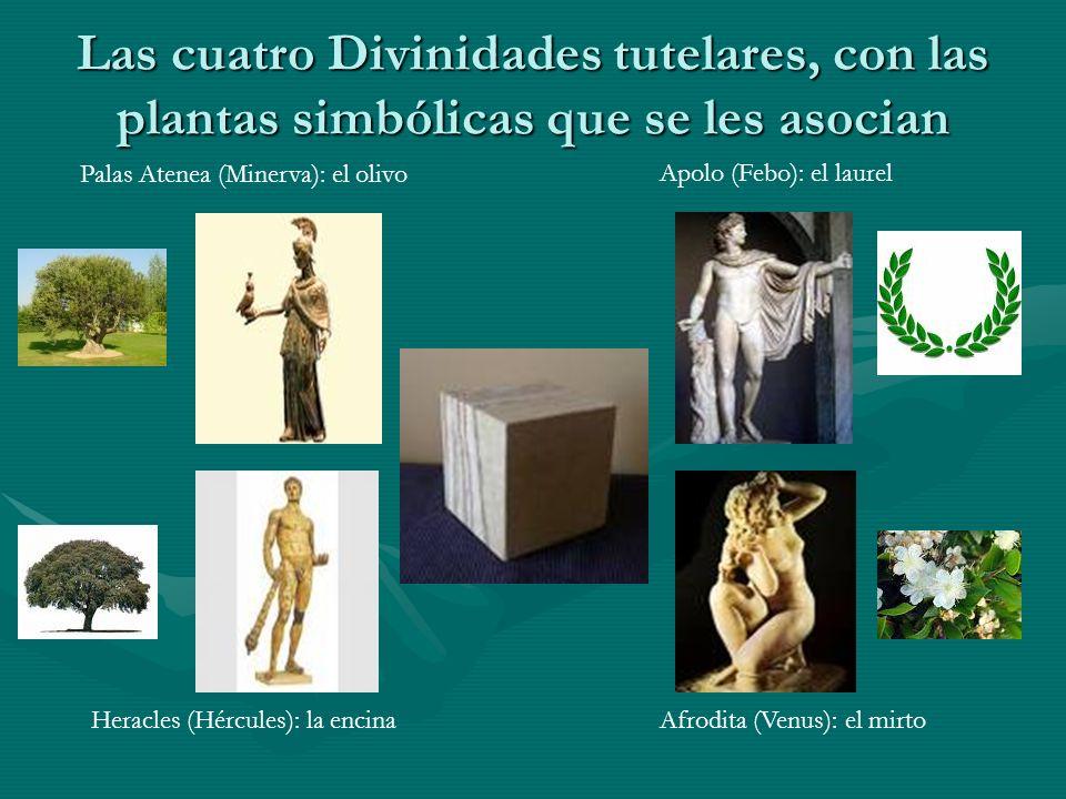 Las cuatro Divinidades tutelares, con las plantas simbólicas que se les asocian Apolo (Febo): el laurel Palas Atenea (Minerva): el olivo Heracles (Hér
