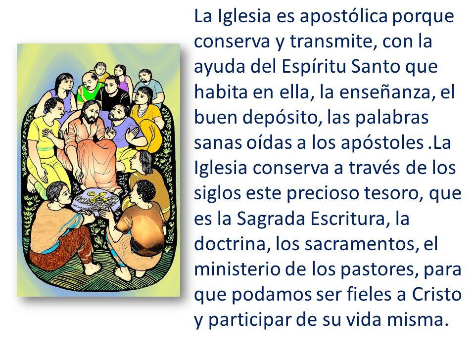 La Iglesia es apostólica porque conserva y transmite, con la ayuda del Espíritu Santo que habita en ella, la enseñanza, el buen depósito, las palabras