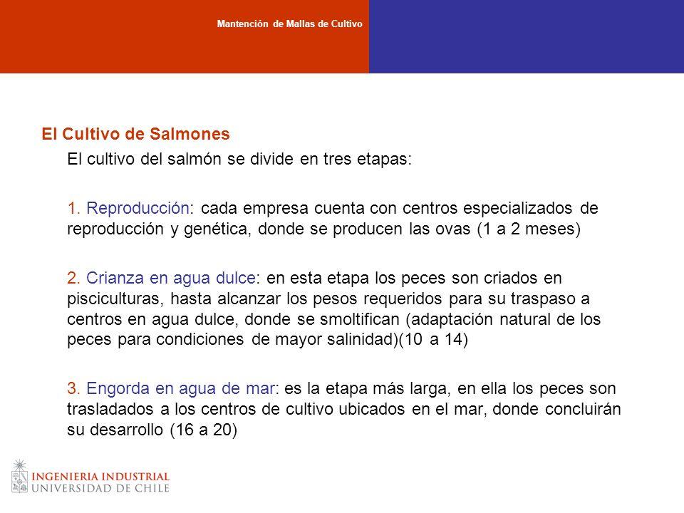El Cultivo de Salmones El cultivo del salmón se divide en tres etapas: 1. Reproducción: cada empresa cuenta con centros especializados de reproducción