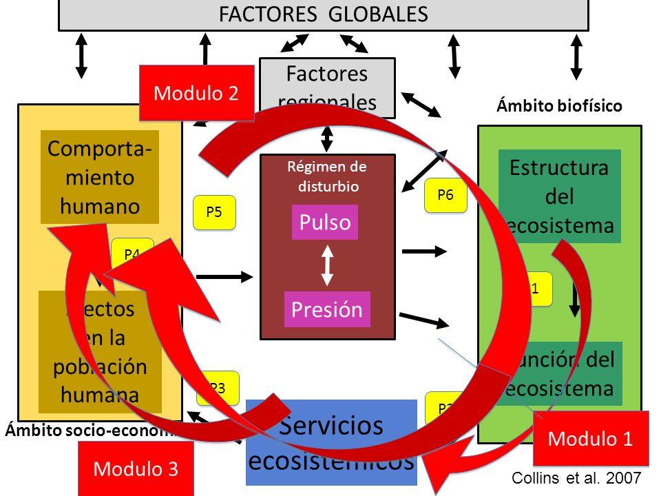 Factores regionales Servicios ecosistémicos Ámbito biofísico Ámbito socio-económico Régimen de disturbio Efectos en la población humana Comporta- mien