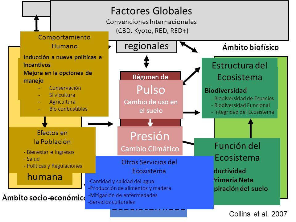FACTORES GLOBALES Servicios ecosistémicos Ámbito biofísico Ámbito socio-económico Régimen de disturbio Efectos en la población humana Comporta- miento