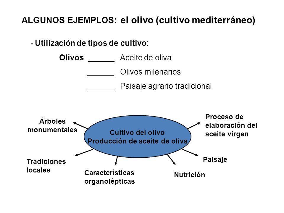 ALGUNOS EJEMPLOS : el olivo (cultivo mediterráneo) - Utilización de tipos de cultivo: Olivos ______ Aceite de oliva ______ Olivos milenarios ______ Pa