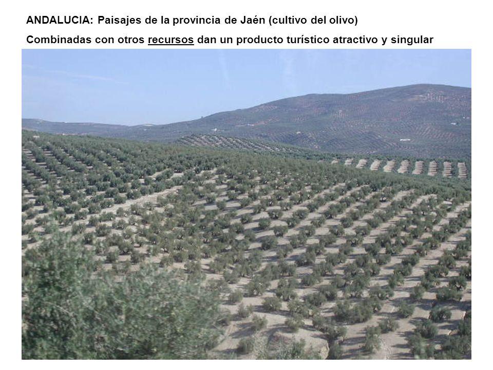 ANDALUCIA: Paisajes de la provincia de Jaén (cultivo del olivo) Combinadas con otros recursos dan un producto turístico atractivo y singular
