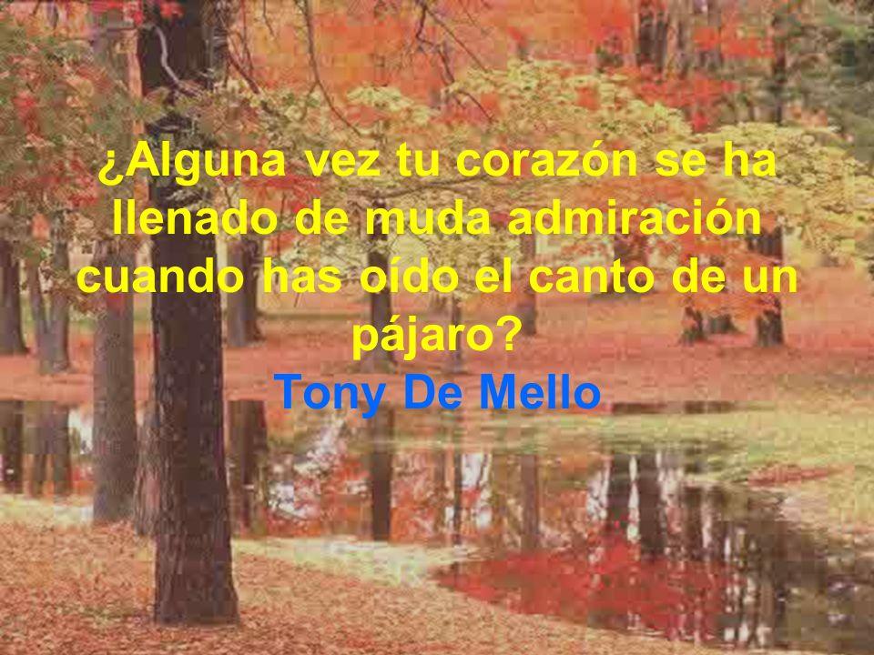 ¿Alguna vez tu corazón se ha llenado de muda admiración cuando has oído el canto de un pájaro? Tony De Mello