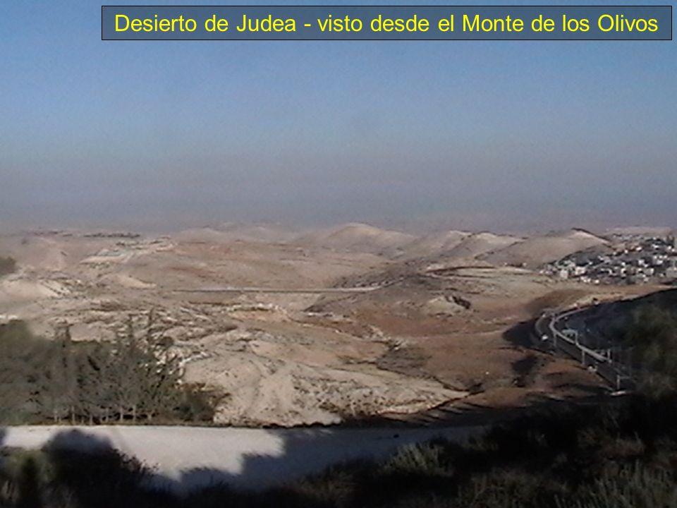 Desierto de Judea - visto desde el Monte de los Olivos