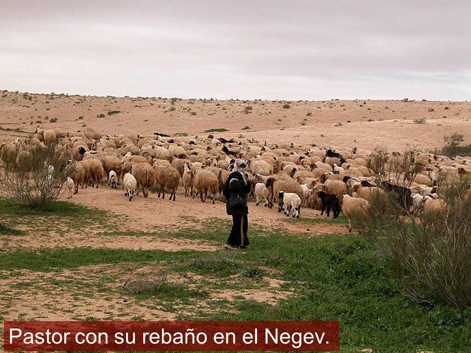Pastor con su rebaño en el Negev.