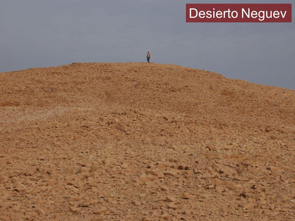 ¿Dónde va a encontrar comida y agua el pastor en este desierto?