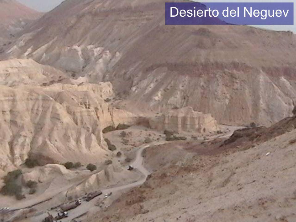 Desierto del Neguev