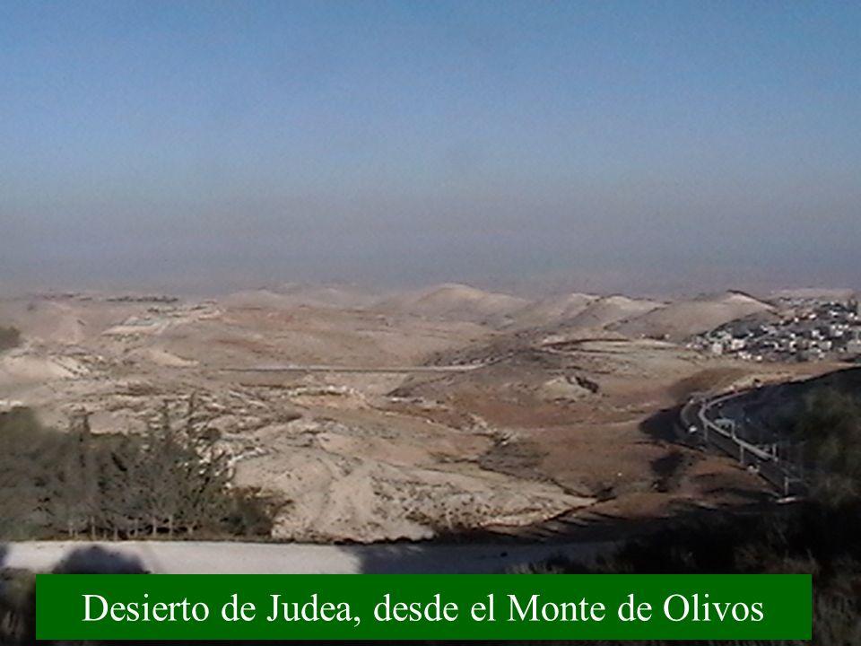 Desierto de Judea, desde el Monte de Olivos