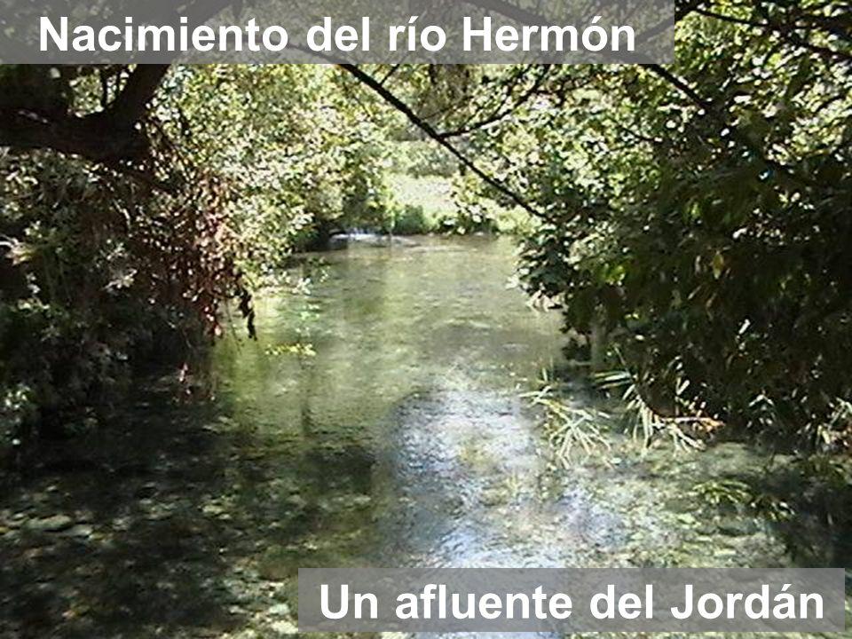 Un afluente del Jordán Nacimiento del río Hermón
