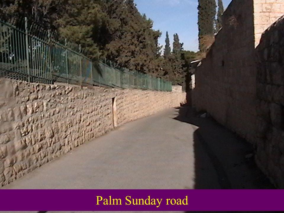Palm Sunday road