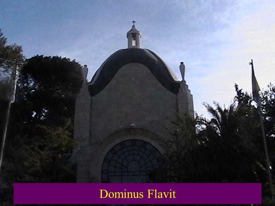 Dominus Flavit