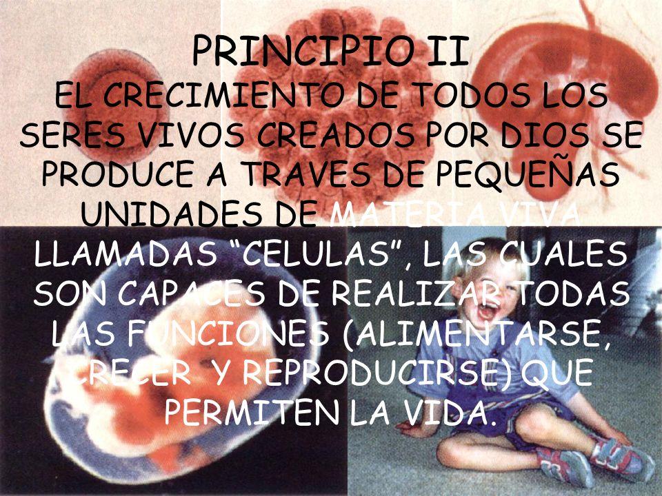 PRINCIPIO II EL CRECIMIENTO DE TODOS LOS SERES VIVOS CREADOS POR DIOS SE PRODUCE A TRAVES DE PEQUEÑAS UNIDADES DE MATERIA VIVA LLAMADAS CELULAS, LAS C