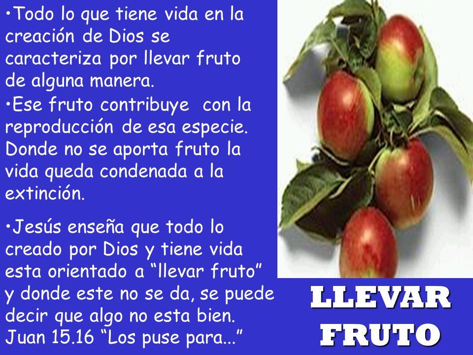Todo lo que tiene vida en la creación de Dios se caracteriza por llevar fruto de alguna manera. LLEVAR FRUTO Jesús enseña que todo lo creado por Dios