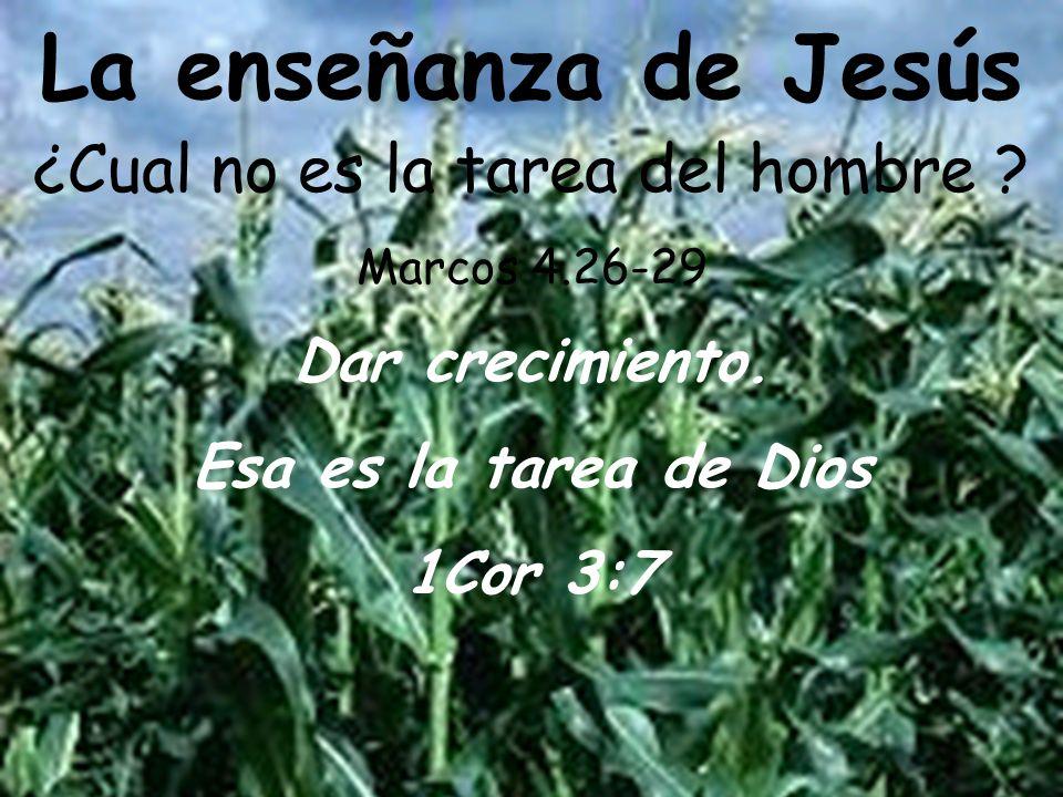 Dar crecimiento. Esa es la tarea de Dios 1Cor 3:7 La enseñanza de Jesús ¿Cual no es la tarea del hombre ? Marcos 4.26-29