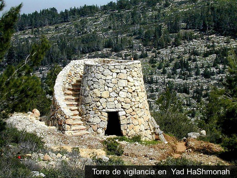 Tetradracma de Augustoplata, 24-20 AC