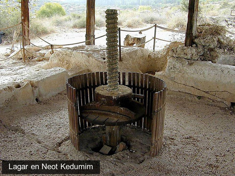 Viñedo debajo de Lachish