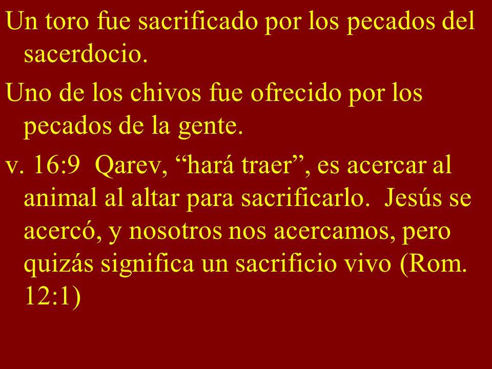 Un toro fue sacrificado por los pecados del sacerdocio. Uno de los chivos fue ofrecido por los pecados de la gente. v. 16:9 Qarev, hará traer, es acer