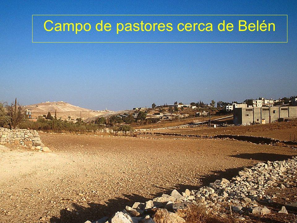 Campo de pastores cerca de Belén