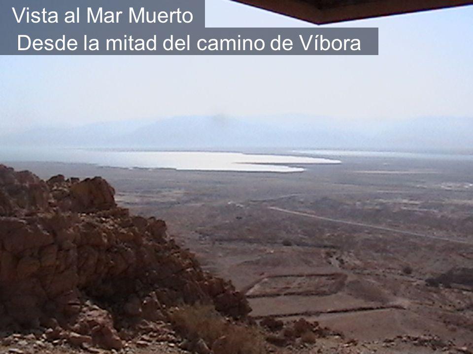 Vista al Mar Muerto Desde la mitad del camino de Víbora