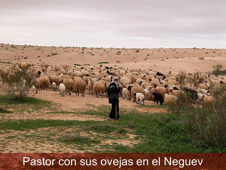 Pastor con sus ovejas en el Neguev