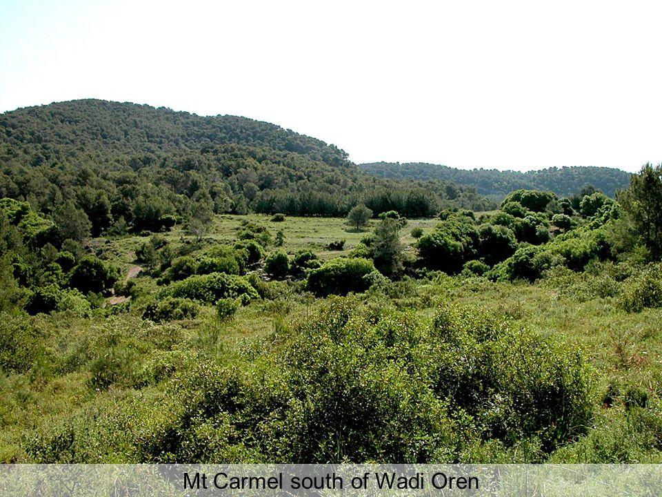 Mt Carmel south of Wadi Oren
