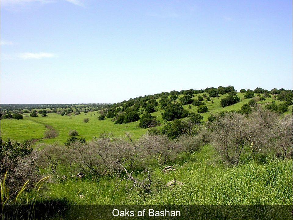 Oaks of Bashan