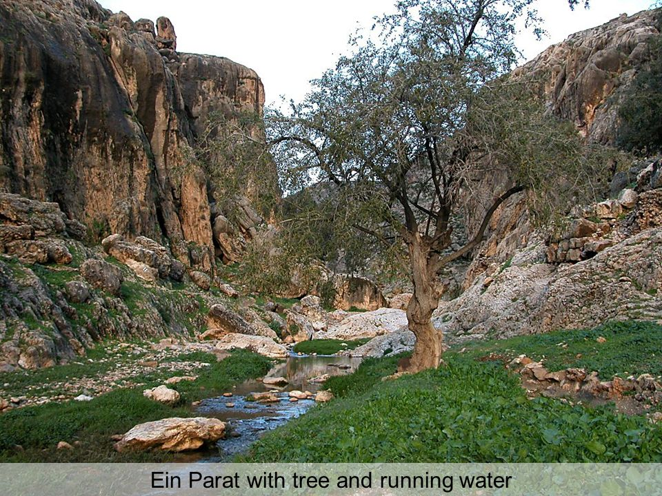 Ein Parat with tree and running water