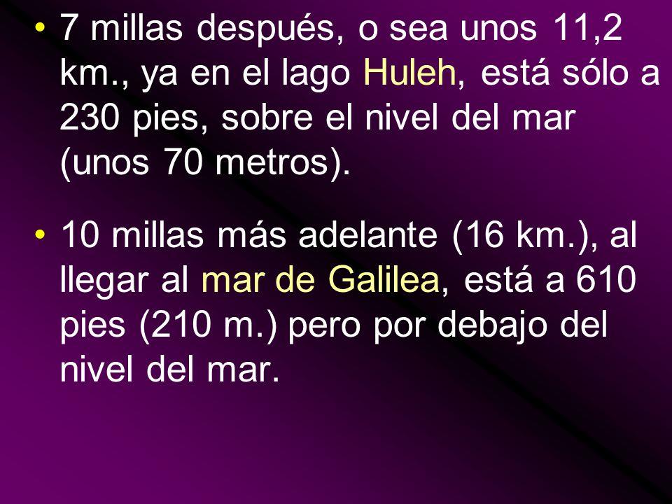 7 millas después, o sea unos 11,2 km., ya en el lago Huleh, está sólo a 230 pies, sobre el nivel del mar (unos 70 metros). 10 millas más adelante (16