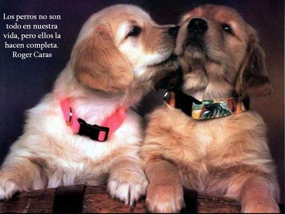 Los perros aman a sus amigos y muerden a sus enemigos, casi al contrario de las personas, quienes tienden a mezclar amor y odio. Sigmund Freud