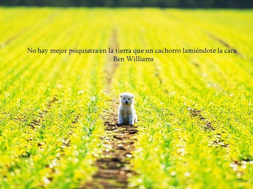 Si recoges un perro hambriento de la calle y lo haces próspero, no te morderá; esa es la principal diferencia entre un perro y un hombre. Mark Twain