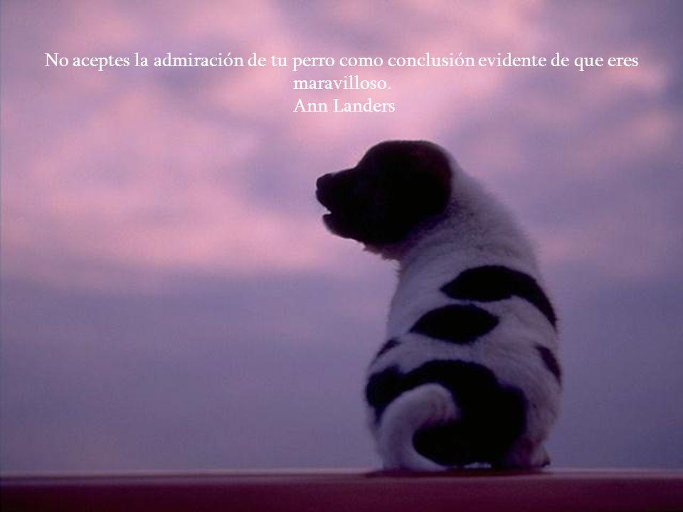 No aceptes la admiración de tu perro como conclusión evidente de que eres maravilloso. Ann Landers