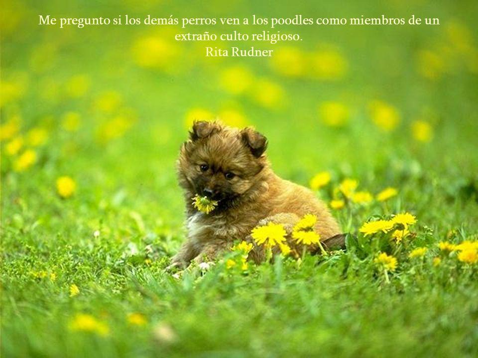 Las mujeres y los gatos harán lo que les plazca, los perros y los hombres deberían relajarse y acostumbrarse a la idea.