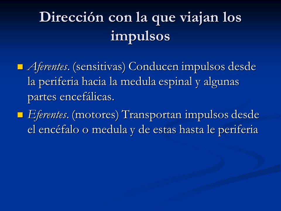 Dirección con la que viajan los impulsos Aferentes. (sensitivas) Conducen impulsos desde la periferia hacia la medula espinal y algunas partes encefál