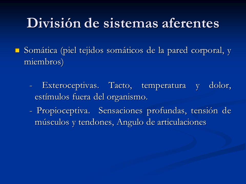 División de sistemas aferentes Somática (piel tejidos somáticos de la pared corporal, y miembros) Somática (piel tejidos somáticos de la pared corpora