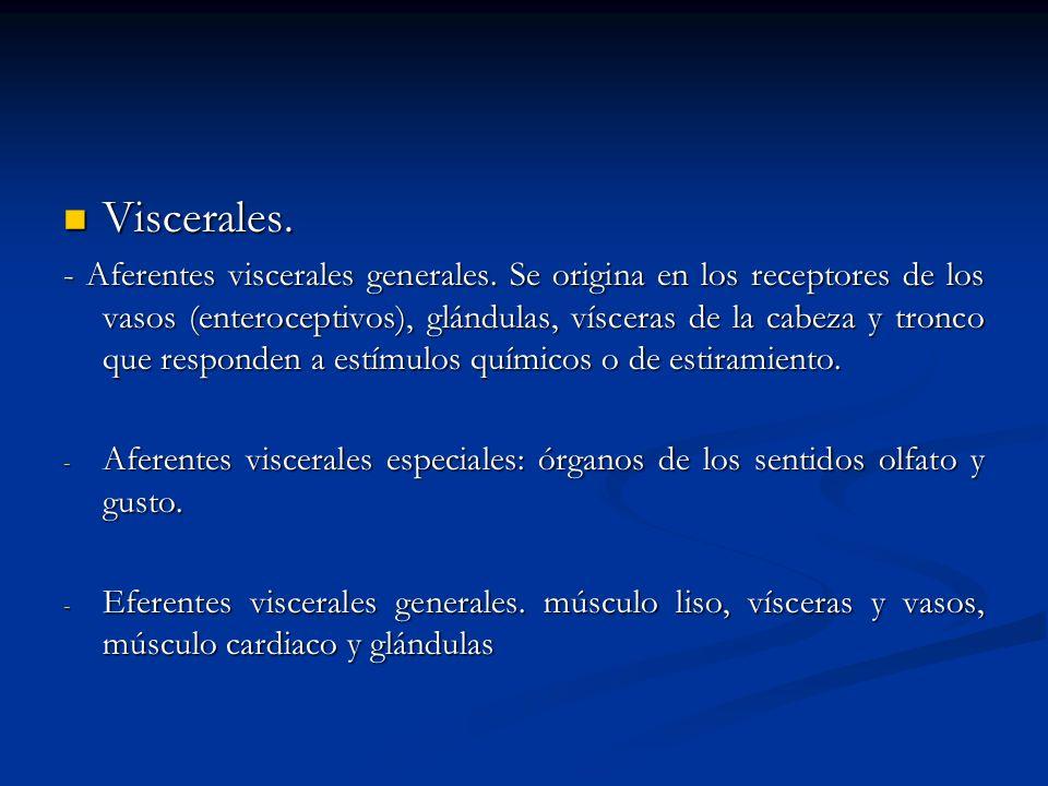 Viscerales. Viscerales. - Aferentes viscerales generales. Se origina en los receptores de los vasos (enteroceptivos), glándulas, vísceras de la cabeza