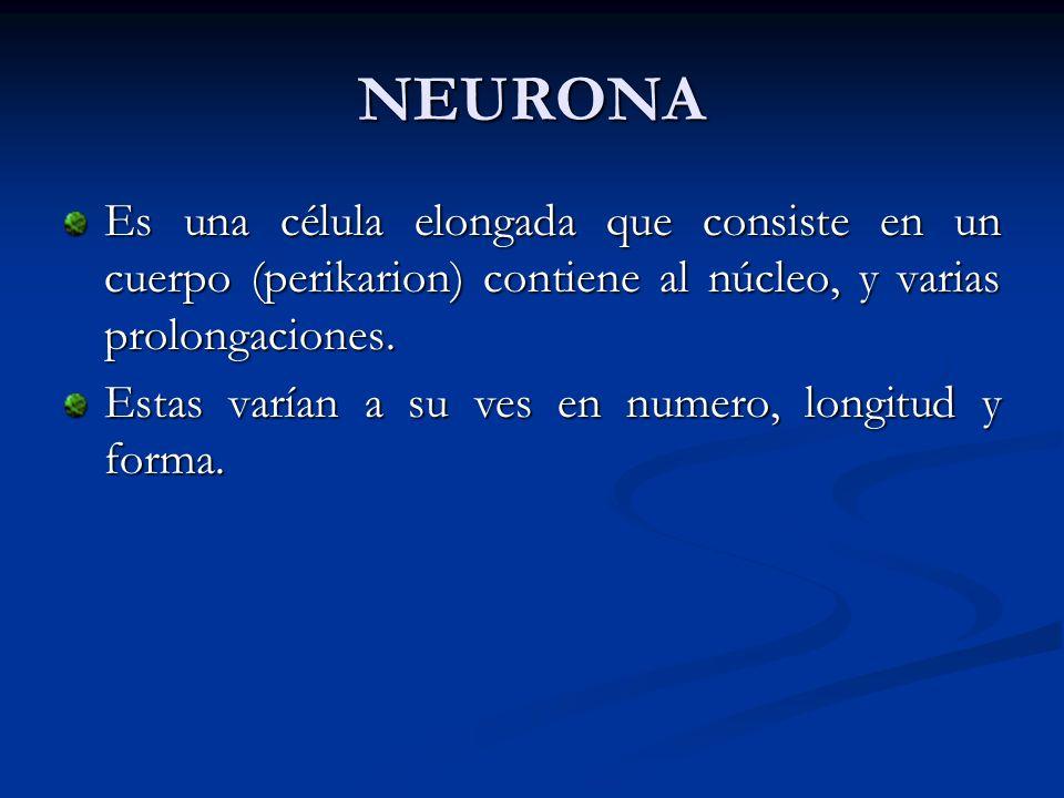 NEURONA Es una célula elongada que consiste en un cuerpo (perikarion) contiene al núcleo, y varias prolongaciones. Estas varían a su ves en numero, lo