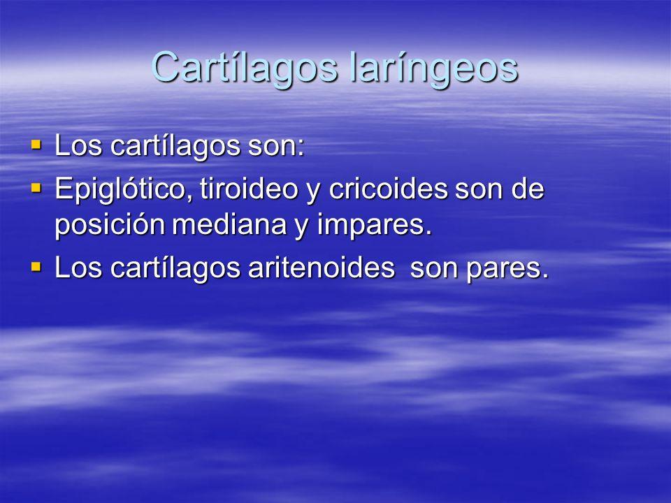 Cartílagos laríngeos Los cartílagos son: Los cartílagos son: Epiglótico, tiroideo y cricoides son de posición mediana y impares. Epiglótico, tiroideo