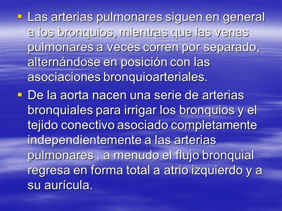 Las arterias pulmonares siguen en general a los bronquios, mientras que las venas pulmonares a veces corren por separado, alternándose en posición con
