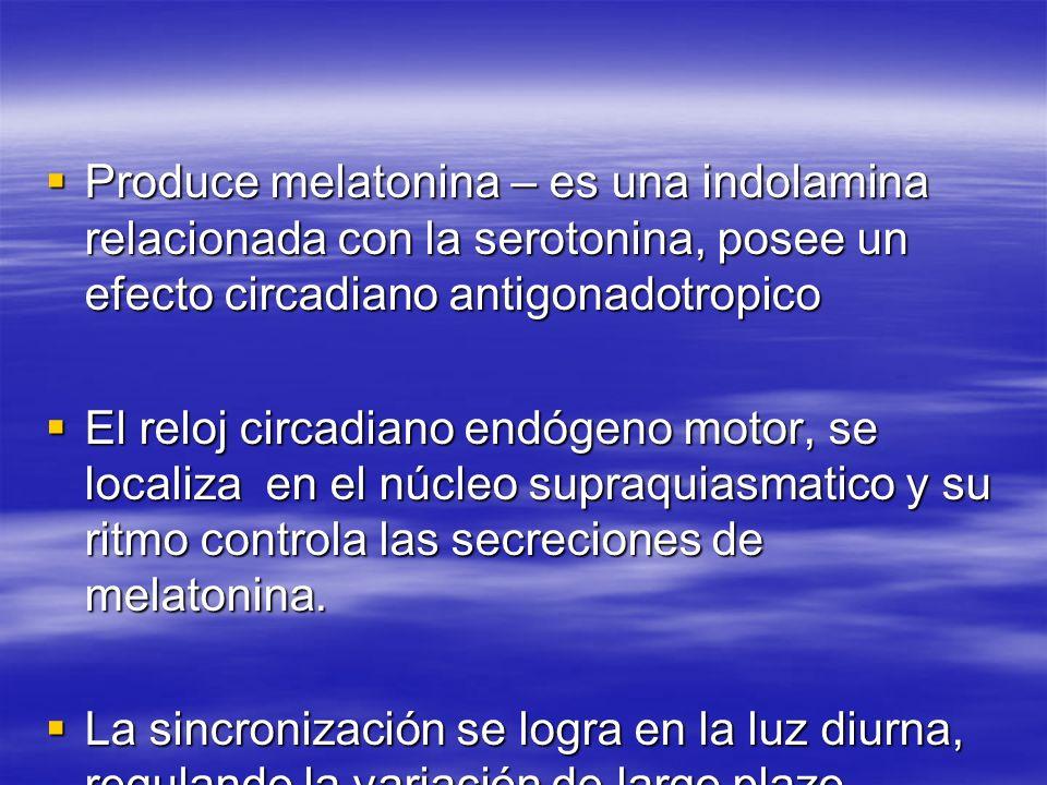 Produce melatonina – es una indolamina relacionada con la serotonina, posee un efecto circadiano antigonadotropico Produce melatonina – es una indolam