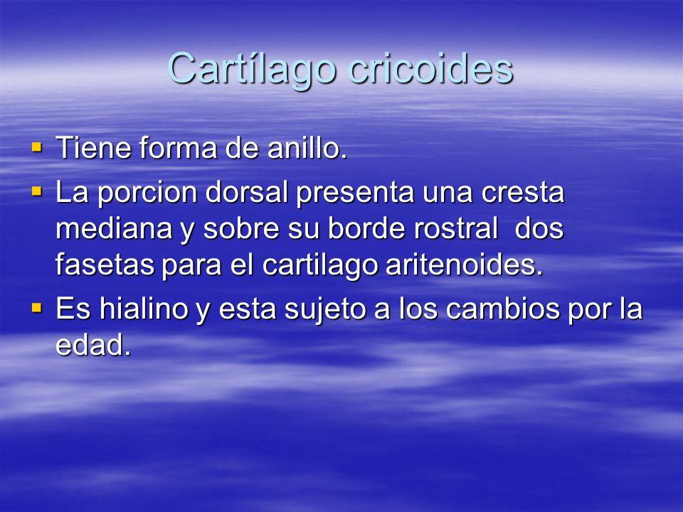 Cartílago cricoides Tiene forma de anillo. Tiene forma de anillo. La porcion dorsal presenta una cresta mediana y sobre su borde rostral dos fasetas p