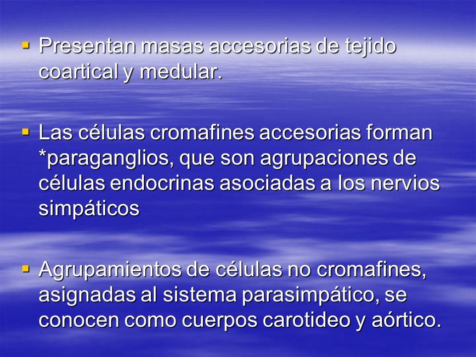 Presentan masas accesorias de tejido coartical y medular. Presentan masas accesorias de tejido coartical y medular. Las células cromafines accesorias