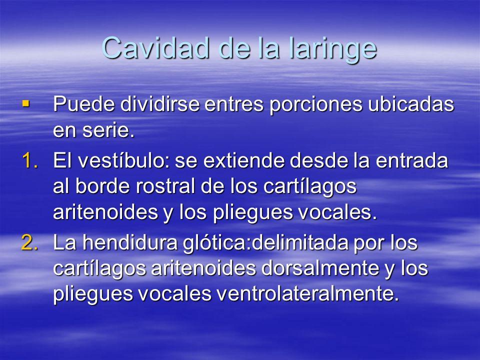 Cavidad de la laringe Puede dividirse entres porciones ubicadas en serie. Puede dividirse entres porciones ubicadas en serie. 1.El vestíbulo: se extie
