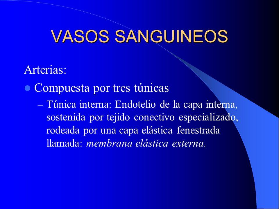 VASOS SANGUINEOS Arterias: Compuesta por tres túnicas – Túnica interna: Endotelio de la capa interna, sostenida por tejido conectivo especializado, ro
