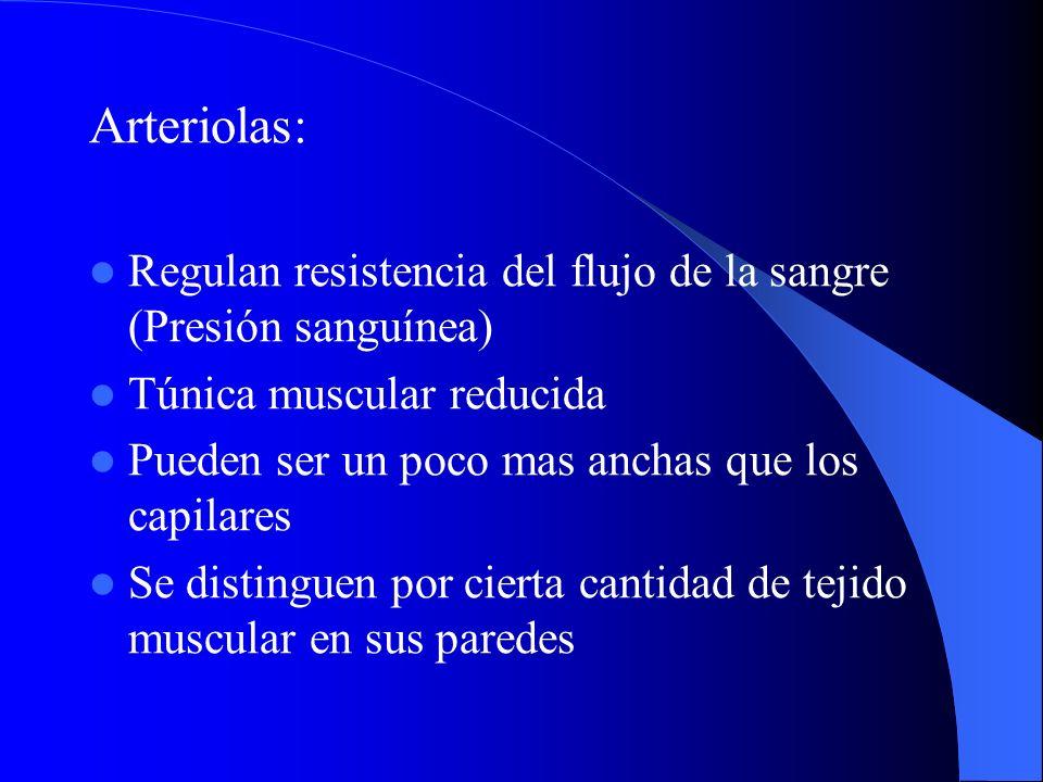 Arteriolas: Regulan resistencia del flujo de la sangre (Presión sanguínea) Túnica muscular reducida Pueden ser un poco mas anchas que los capilares Se