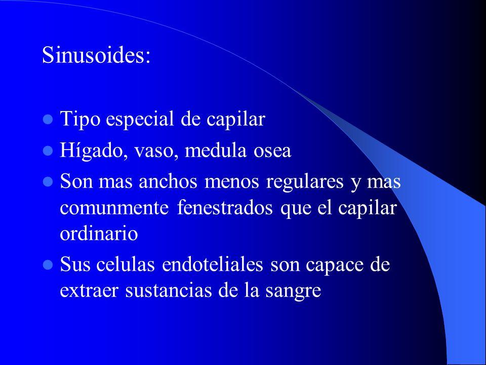 Sinusoides: Tipo especial de capilar Hígado, vaso, medula osea Son mas anchos menos regulares y mas comunmente fenestrados que el capilar ordinario Su