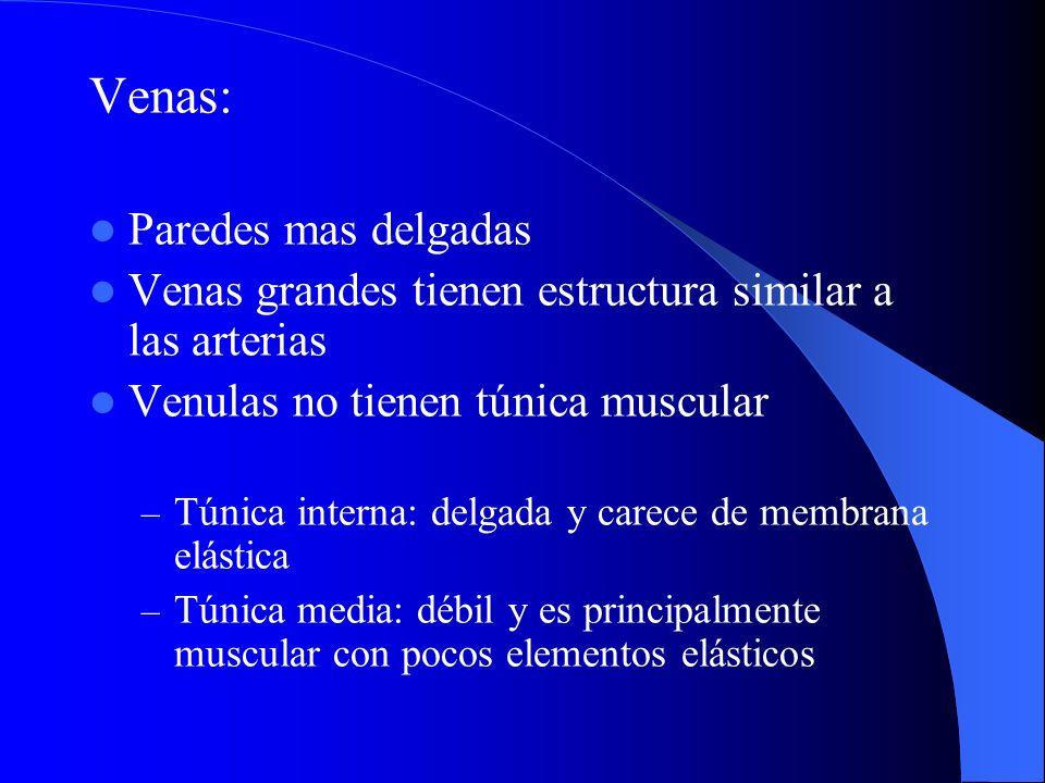 Venas: Paredes mas delgadas Venas grandes tienen estructura similar a las arterias Venulas no tienen túnica muscular – Túnica interna: delgada y carec
