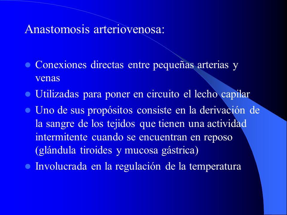 Anastomosis arteriovenosa: Conexiones directas entre pequeñas arterias y venas Utilizadas para poner en circuito el lecho capilar Uno de sus propósito