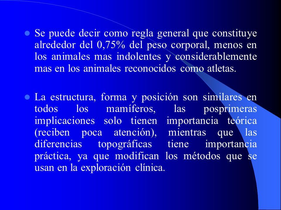 Se puede decir como regla general que constituye alrededor del 0,75% del peso corporal, menos en los animales mas indolentes y considerablemente mas e