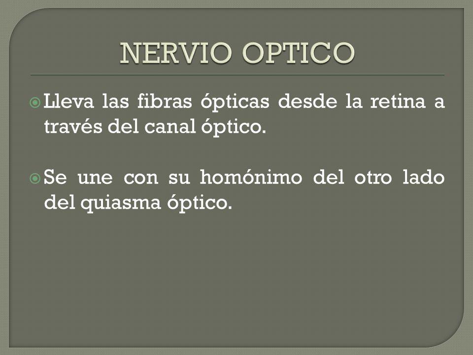 Lleva las fibras ópticas desde la retina a través del canal óptico. Se une con su homónimo del otro lado del quiasma óptico.
